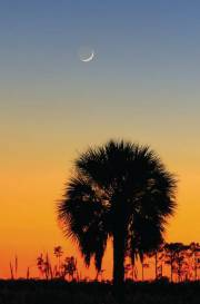 Crescent moon at twilight, Pine Glades Natural Area
