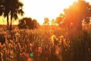 Golden light at sunset, Pine Glades Natural Area