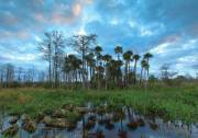 Cypress and palm hammock, Pine Glades Natural Area