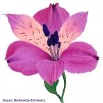 Susan Berkowitz Schwartz 153