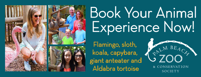 Book up-close animal adventures at the Palm Beach Zoo!