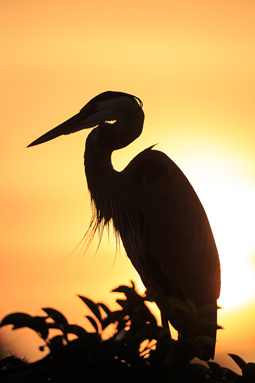 Birds of South Florida:  Take your wildlife images to the next level with Lewis Kemper