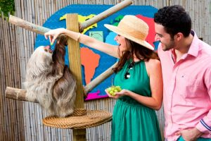 Palm Beach Zoo Animal Experiences - Sloth