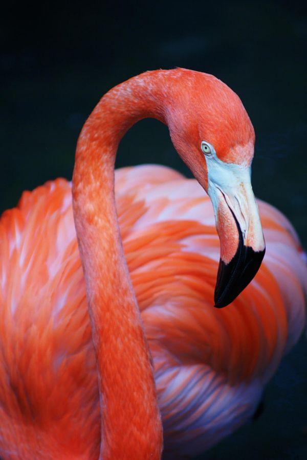 Summer Safari Savings at the Palm Beach Zoo