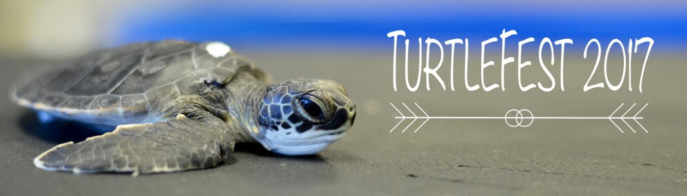 Turtlefest 2017