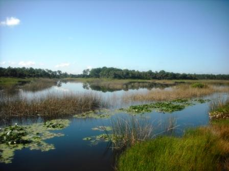 Palm Beach County Natural Areas Festival