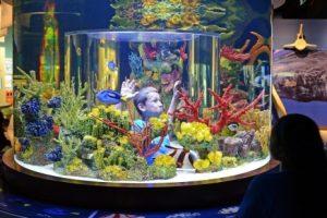 Science Center Sea-fari Nights at the Museum
