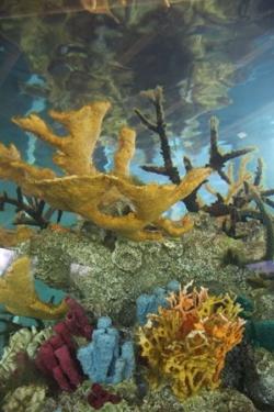 Outdoor Marine Aquarium Feedings