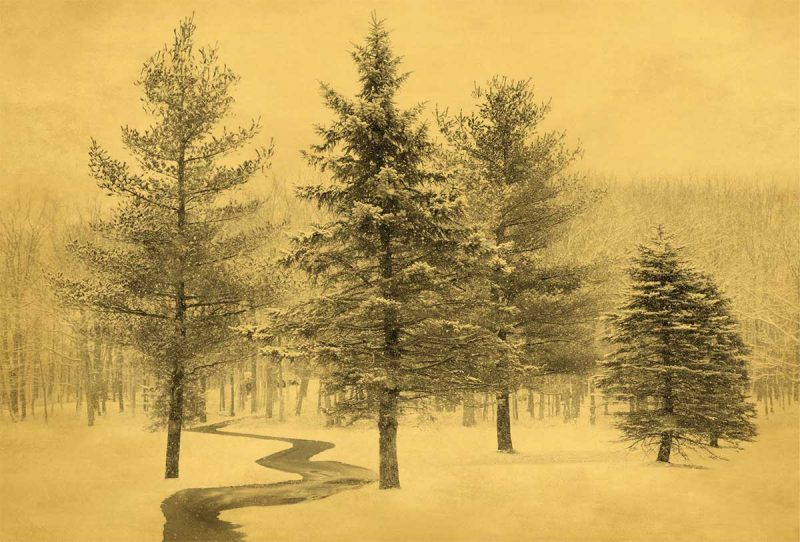 """Winter Path"" is the quintessential wintry scene."